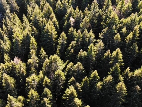 Herbstlicher Wald im ZIllertal